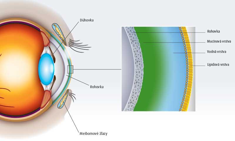 Schematické znázornenie neporušeného slzného filmu
