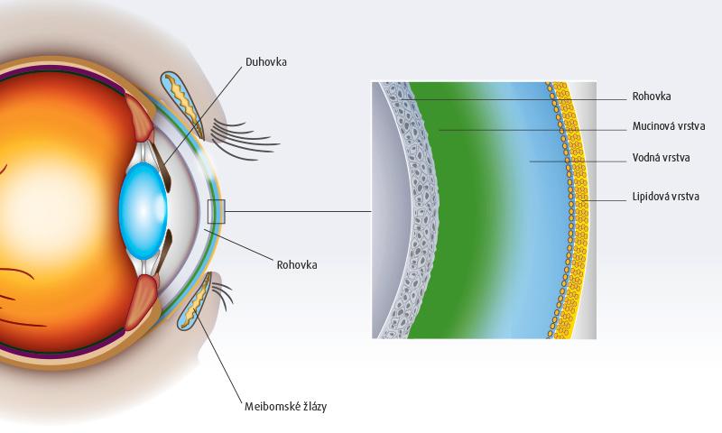 Schematické znázornění neporušeného slzného filmu